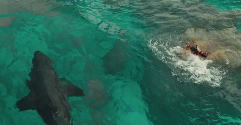 The Summer's Must See Movie: The Shallows
